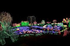 Bellevue Botanical Gardens - Robin-Myers